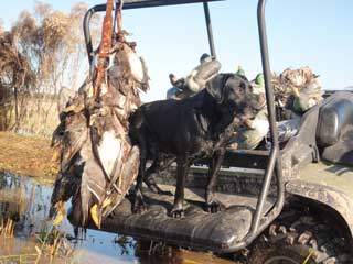 Texas Waterfowl Hunting | Guides for Duck Goose Dove & Teal Hunts
